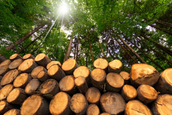 biomasse clima